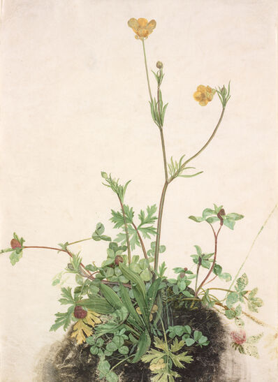 'Buttercups, Red Clover, and Plantain', 1526