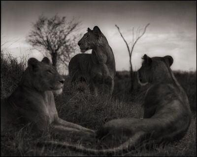 Nick Brandt, 'Lion Circle, Serengeti, 2012', 2012