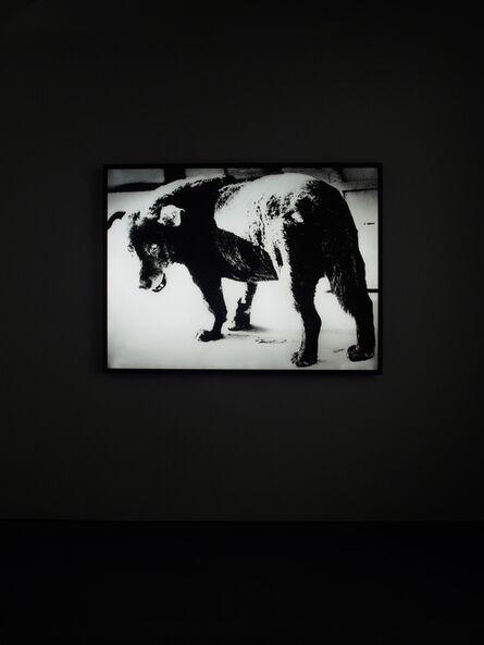 Daido Moriyama, 'Lightbox: Stray Dog, Misawa', 1971/2018
