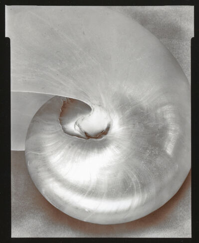 Olivia Parker, 'Nautilus', 1976