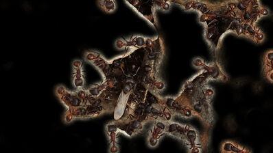 Leslie Thornton, 'Ants with Black', 2010