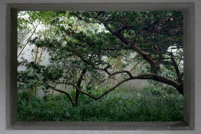 Shen Wei 沈玮 (b. 1977), 'Window', 2016