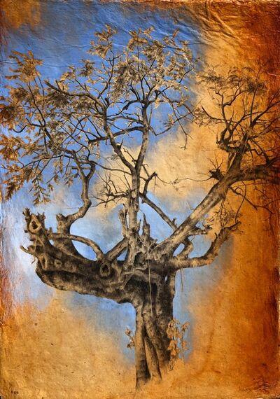 Dina Brodsky, 'Tree #55', 2019