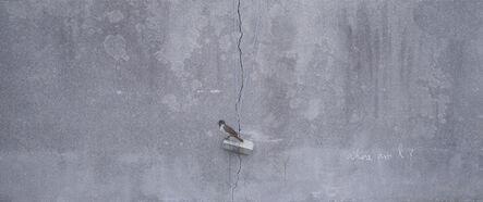 Honggoo Kang, 'Sparrow', 2015