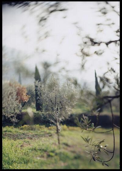 Joann Verburg, 'Campello Olive Trees for Giulio', 2003