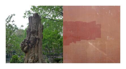 Ellen Wallenstein, 'WSP Tree/ Grafitti', 2017
