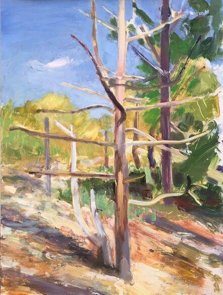 Donald Beal, 'Dead Pine in Landscape, Cape Cod', 2020