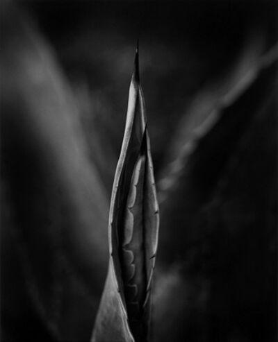 Wynn Bullock, 'Cactus', 1958