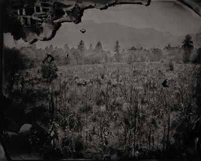 Eric Overton, 'Elk Weed (Pine Valley)', 2015