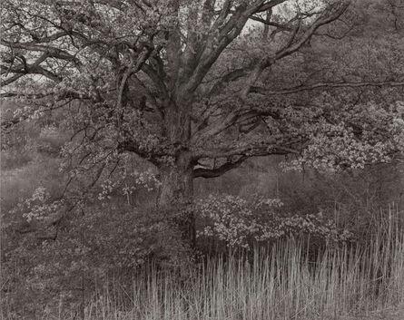 George Tice, 'Oak Tree, Holmdel, New Jersey', 1970-printed 1980