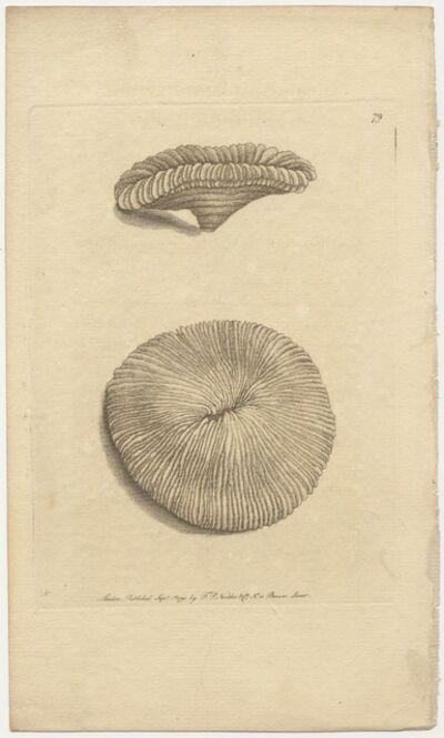 Frederick Polydore Nodder, 'Plate 79: The Mushroom Madrepore', 1791
