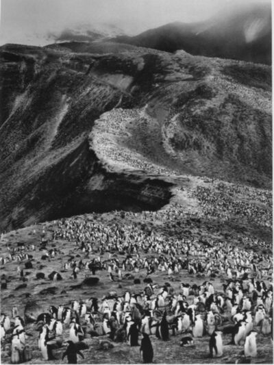 Sebastião Salgado, 'On Deception Island, Antarctic Peninsula', 2005