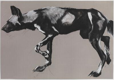 Rose Corcoran, '29. Wild Dog on Grey II'
