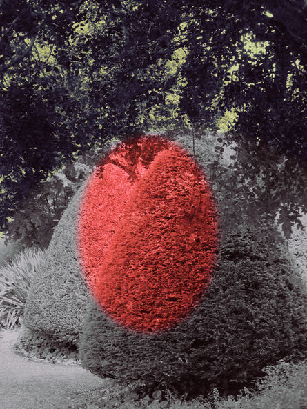 Helen Sear, 'Surreal Bush 6', 2020