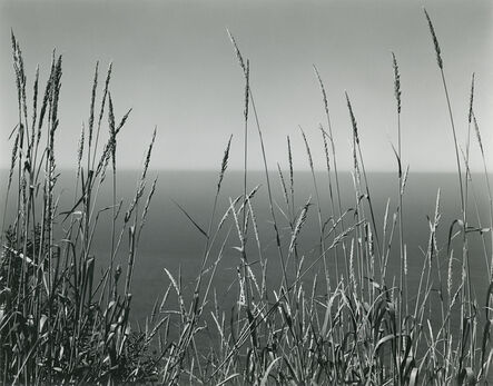 Edward Weston, 'Grass Against Sea', 1937
