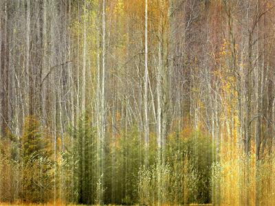 John Isaac, 'Landscape I', 2016