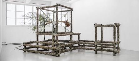 Siobhan Hapaska, 'a wolf, an olive tree and circumstances', 2014