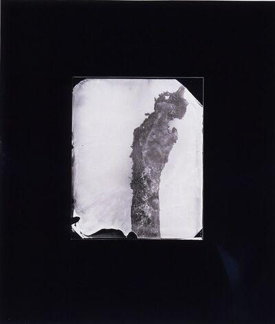 Sally Mann, 'Perfect Paw #15', 2000