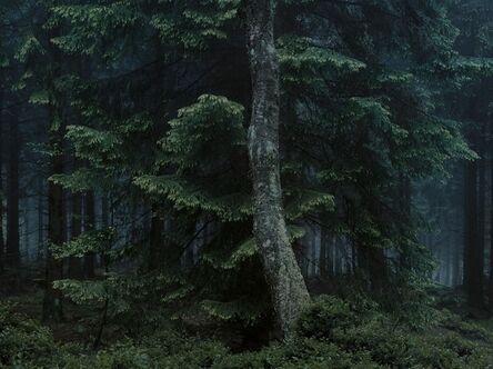 Michael Lange, 'WALD | Landscapes of Memory#6678', 2010
