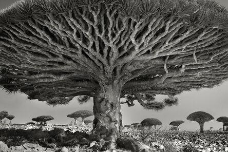Beth Moon, 'Heart Of The Dragon, Socotra, Yemen.', 2010