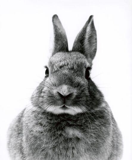 Walter Schels, 'Rabbit', 2000