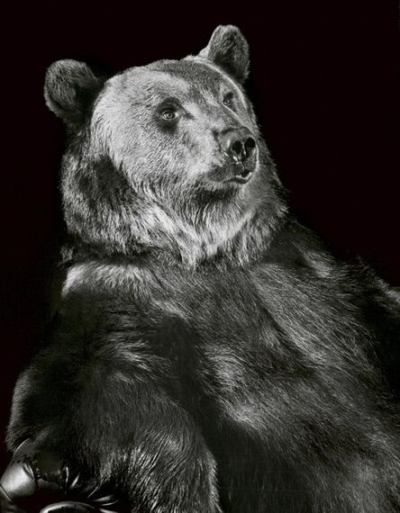 Walter Schels, 'Brown Bear', 1999