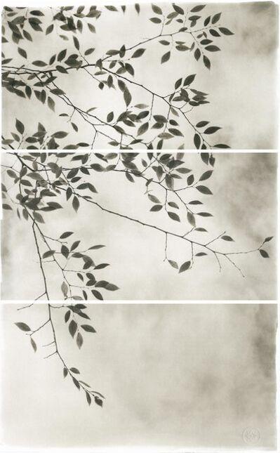 Brigitte Carnochan, 'Late Leaves III', 2012