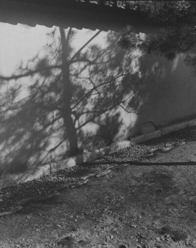 Huang Rui 黄锐, 'Water in Pine 2', 2000
