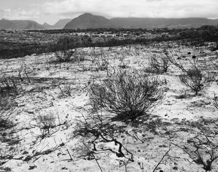 John Riddy, 'Peninsula (Ocean View 5) 2015', 2015