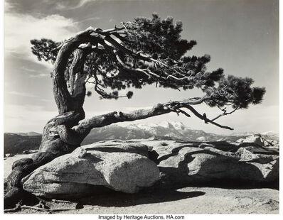Ansel Adams, 'Jeffrey Pine, Sentinel Dome', 1940