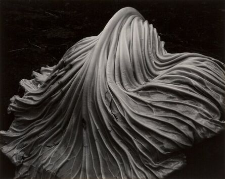 Edward Weston, 'Cabbage Leaf (from Fiftieth Anniversary Portfolio)', 1931
