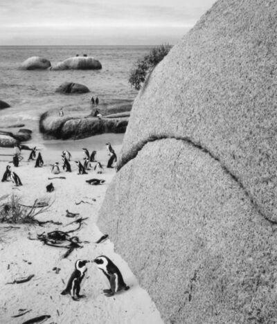Pentti Sammallahti, 'Boulders Beach, South Africa', 2002