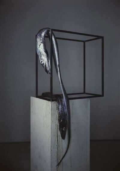 Richard Learoyd, 'Sabre Fish', 2009