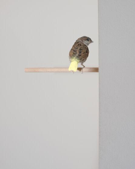 Famed, ' Untitled [Gelbe Farbe macht aus Spatzen Kanarienvögel]', 2012