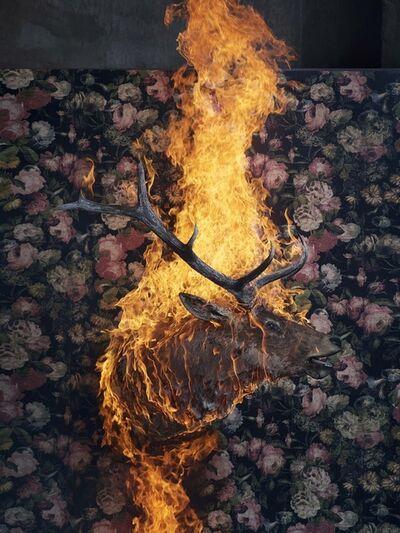 Christian Houge, 'Elk, Residence of Impermanence', 2018