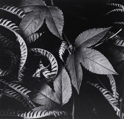 Brett Weston, 'Ivy and Leaves, Hawaii', ca. 1978