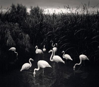 Pentti Sammallahti, 'Mt. Etjo, Namibia (Flamingos)', 2005