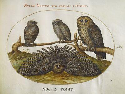 Joris Hoefnagel, 'Animalia Volatilia et Amphibia (Aier): Plate LV', ca. 1575/1580