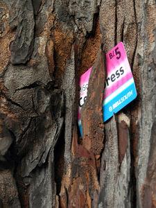 Donna Conlon, 'Trash trees (prepaid)', 2004