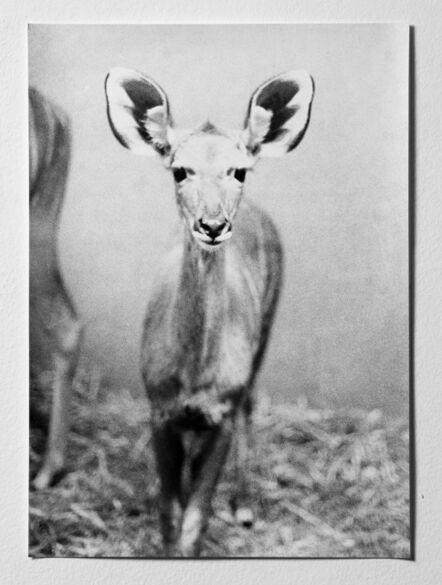 Jochen Lempert, 'Untitled (Antilope)', 2008