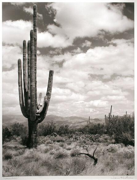 Jerome Hawkins, 'Saguaro', 1987