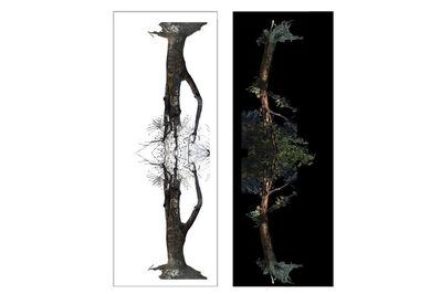 Voluspa Jarpa, 'Árbol Día (Day Tree) + Arbol Noche (Night Tree)', 2021