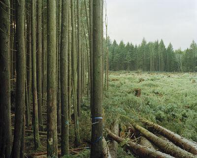 Eirik Johnson, 'Freshly Felled Trees', 2007