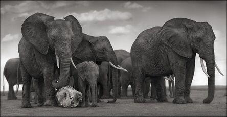 Nick Brandt, 'Elephant Skull, Amboseli ', 2010