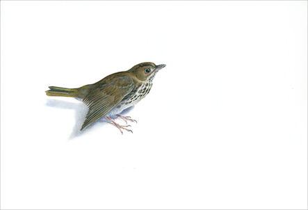 Kevin King, 'Ovenbird Warbler', 2014