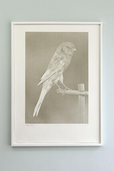 Carsten Höller, 'Canaries (1)', 2009