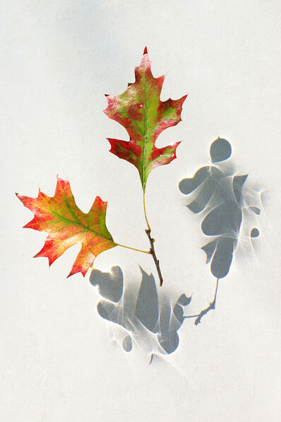 Larry Garmezy, 'Dancing Leaves #1 - Botanical, Floral photography, abstract waterscape, autumn leaves, fine art photography, shadows, minimalist, serene, relaxing', 2020