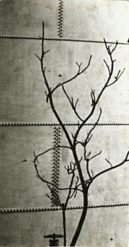 André Kertész, 'Modernist Tree Study against a Riveted Metal Tank', 1923c/1923c