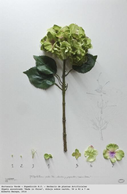 Alberto Baraya, 'Hortensia Verde. Expedición N.Y. - Herbario de Plantas Artificiales', 2014
