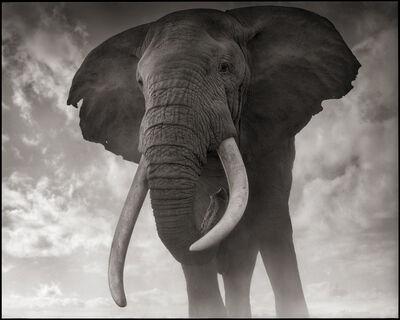 Nick Brandt, 'Elephant Against Sky, Amboseli', 2011